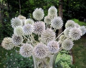 24 Stems of Thistles (echinops). Preserved florals. Home Decor. Floral arrangements.