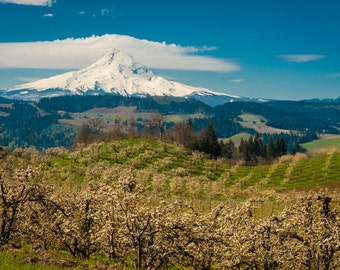 Spring Photo Hood River Valley Landscape Photography Apple Orchard Mountain Photograph Oregon nat147