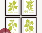Modern Botanical (Fruits and Spices) Set of 4 - Art Prints (Featured in Chartreuse on White) Botanical Flower Art Prints