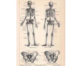 1894 SKELETON HUMAN ANATOMY print original antique anatomy lithograph - side 1 - small size