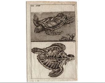 1809 SEA TURTLE PRINT anatomy original antique engraving rare and unusual reptile