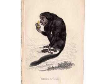 1833 MONKEY APE PRIMATE print original antique engraving -  the couxio