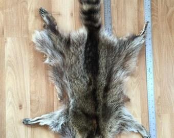 Racoon tanned hide