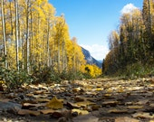 Follow the Yellow Leaf Road / Aspens / Crested Butte, Colorado (photograph, various sizes)