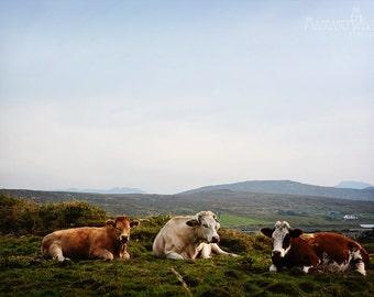 St Patricks Day, March, Ireland, Irish, Art Photography, Cows, Farming, Kitchen, Mountains, Milk, Pub Art, Margaret Dukeman Photography