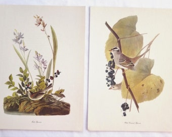 1940's Vintage Audubon Bird Prints Wall Hanging Set of 2, Field Sparrow and White Crowned Sparrow, Original Large Sized
