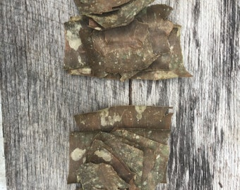 Natural Birch Bark for crafting