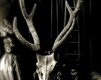 bedazzled deer skull photo print