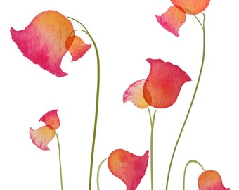 Pink, red, yellow flowers / tulips - 8x10 print