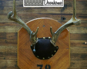 Vintage Antler Mount Plaque 1978 Unique Taxidermy Woodland Glam