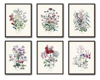 Fleurs de Jardin Print Set No. 5, Botanical Print, Giclee, Art Print, Antique Botanical Prints, Flower Prints, Wildflower Prints, Collage