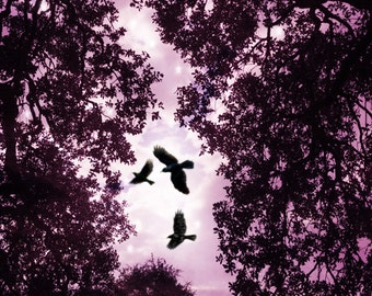 Bird Art/Pink/Crows/Trees/Night Time/Silhouette/5x7/11x14 Prints