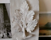 Clay Relief of a Leaf