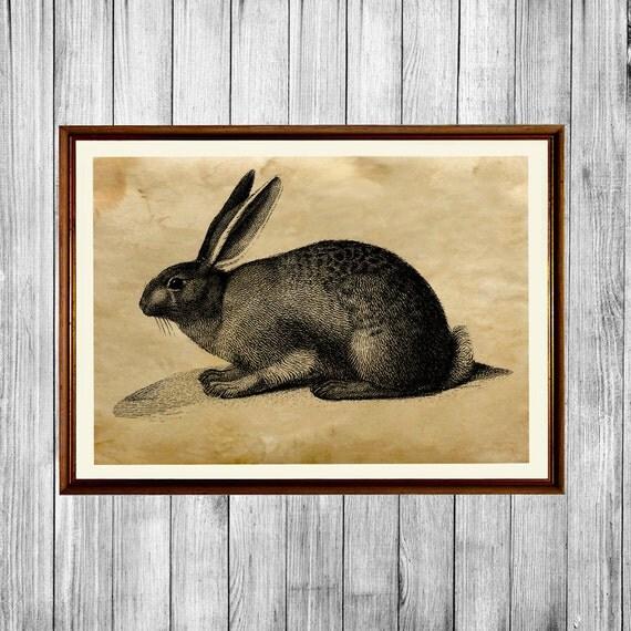 Https Www Etsy Com Listing 242707746 Rabbit Poster Rustic Home Decor Animal