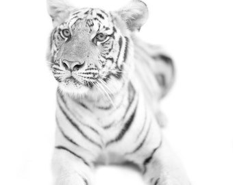 Tiger photography. Minimalist Zen big cats wall art. Tiger black and white home decor. Large jungle animals print. Modern clean simple art