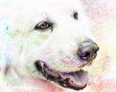 Great Pyrenees White Dog Portrait Square Fine Art Photography Print or Gallery Canvas Wrap Giclee