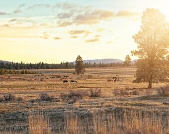 Landscape Photo | Horses | Vivid Colors | Oregon Photography | Mustang Photo | Vintage Tones | Central Oregon | Desert Photo