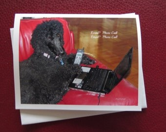 Poodle Birthday Card / Birthday Dog Card / Belated Birthday Card / Handmade Photo Card / Any Occasion Card / photo card / photograph