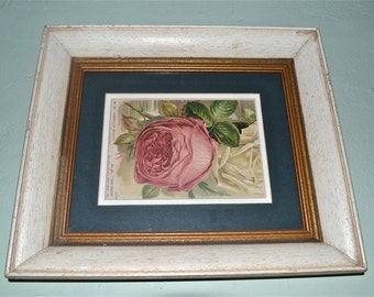 Shabby Chic Framed Old Rose Lithograph Plate  - WA23