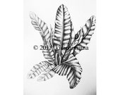 Pen and ink pointillism fern drawings, Custom Order for SH, original artwork OOAK