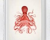 Vintage octopus no.10- Wall decor poster- sea life print- vintage natural history SPOJ046
