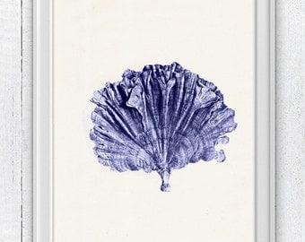 Blue coral no.05 - sea life print - Antique sealife Illustration - Marine  sea life illustration A4 print SPC057
