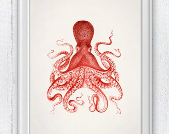 Vintage octopus no.10- Wall decor poster- sea life print- vintage natural history SPOJ046