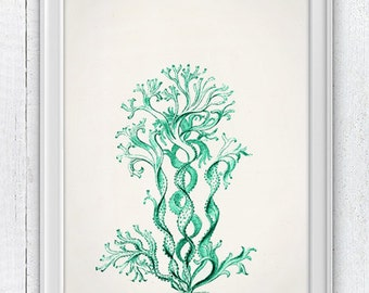 Seafoam seaweed n02- Antique sealife Illustration - sea life print -Marine  sea life illustration A4 print SPC08