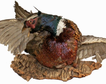"Vintage Western Or Man Cave Style Decor 25""w Ringneck Pheasant Taxidermy Mount On Tree Bark Base"