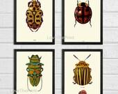 Beetle Print SET of 4 Art Print Antique Beetles Ladybug Insect Illustration Garden Forest Nature Home Wall Decor Interior Design to Frame