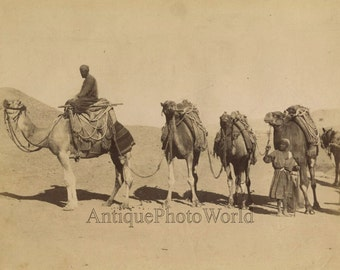 Arab men caravan camels antique albumen photo Egypt