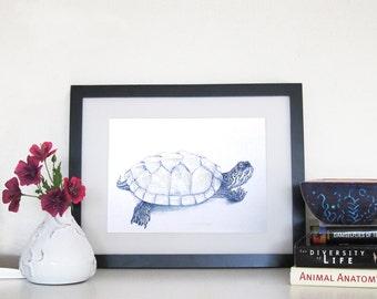 Map Turtle - 8 x 10 Print