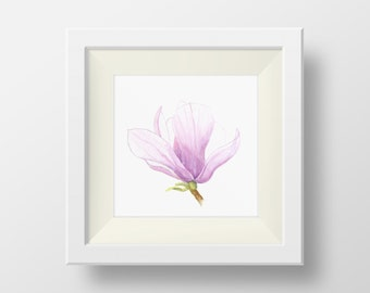 Magnolia Bud - 5 x 5 Print