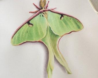 Moth - Luna Moth