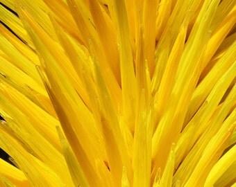 Yellow bursting