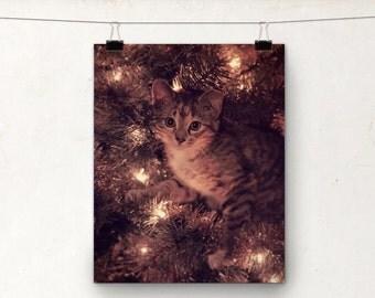 Christmas Tree, Kitten Photo, Photograph, Print, Lights Garland, Tabby