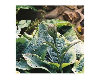 A3 Fine art photography print, contemporary nature, botanical