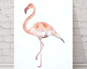 Original Watercolour Illustration Draw A4 size Flemish Bird Wall Decor Nature Life