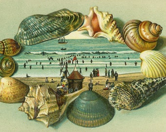 A Scenic View Bordered with Sea Shells (Art Prints available in multiple sizes)