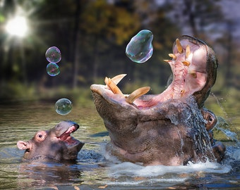 Hippos and Bubbles (Art Prints available in multiple sizes)