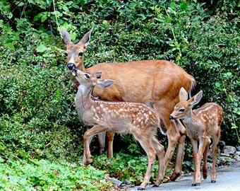 Deer Print, Deer Fawn, Baby Animal Art, Deer Decor, Wildlife Photography, Nature Photography, Twins, Nature Prints, Nature Art, Baby Animals