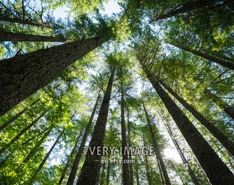 Forest Photo Sky Tree Photograph Nature Trunks Green Nature Pines Wall Art Home Decor Fine Art Print #vi5