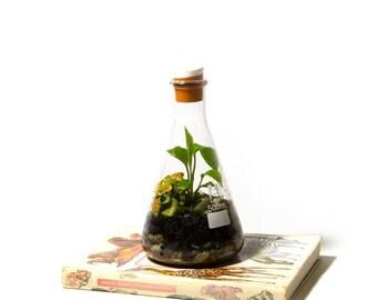 500ml Erlenmeyer Flask Terrarium