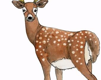 deer original watercolor painting