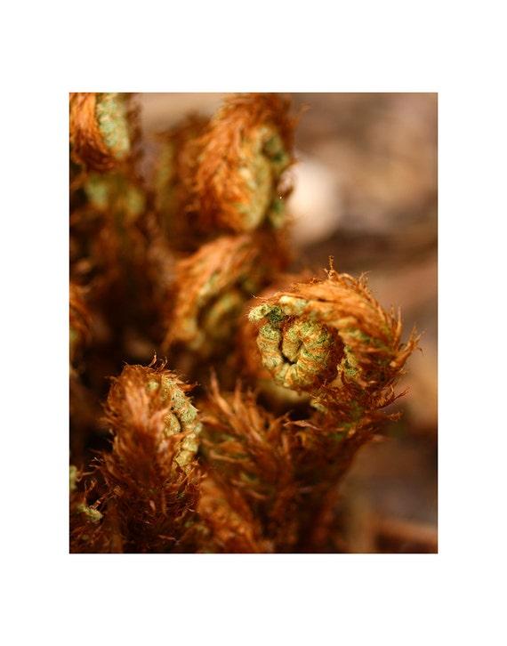Fern Photography, Botanical Photo, Fern Photo, Fern Fiddleheads, Fine Art Photography, Nature Photography, Macro Photography, Home Decor