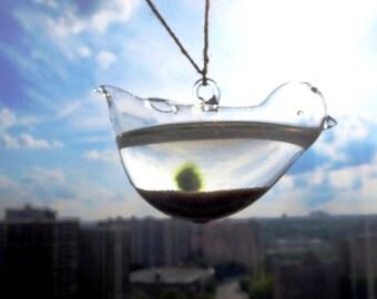 Live Marimo Moss Ball Terrarium Necklace -  Mini Marimo Moss  necklace --lucky Orb Marimo Moss Ball  -Mini Terrarium  globe  charm