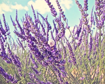 Lavender Photography, French Wall Art, French Decor, Lavendar Photo Print, Fine Art Photography, Southern France Floral Decor