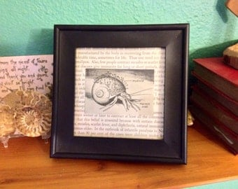 Framed Hermit Crab Print from a 1950s Science Book