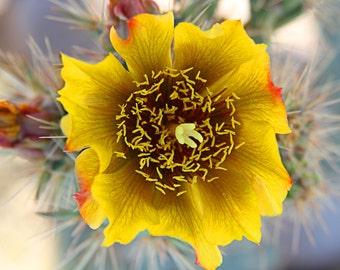 Flower Photography Arizona