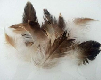 Majestic Wedged Tailed Eagle Feathers - x 20 pieces